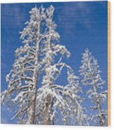 Snow Covered Wood Print