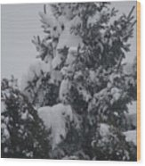 Snow Covered Pine Wood Print