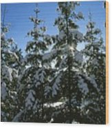 Snow-covered Pine Trees Wood Print by Taylor S. Kennedy
