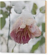 Snow-covered Rose Flower Wood Print