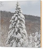 Snow Covered Spruce Wood Print