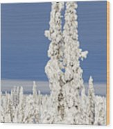Snow Covered Spruce Trees Wood Print