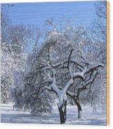 Snow-covered Sunlit Apple Trees Wood Print
