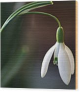 Snow Drop Wood Print