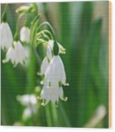 Snow Drop Lily Wood Print