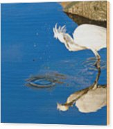 Snowy Egret 6 Wood Print
