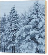 Snow Flocked Pines Wood Print