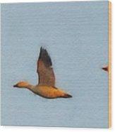 Snow Geese At Dawn Wood Print