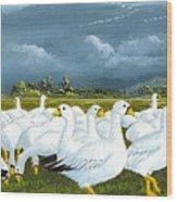 Snow Geese Gathering Wood Print