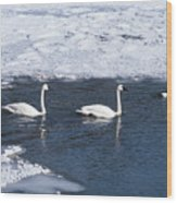 Snow Geese On The Move Wood Print