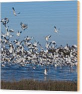 Snow Geese Takeoff I Wood Print