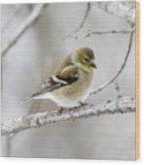 Snow Gold Finch Wood Print