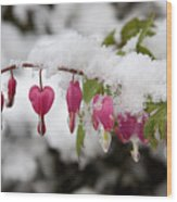 Snow Heart Wood Print by Terry Walters