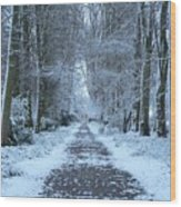 Snow In The Avenue Wood Print