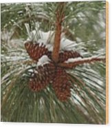 Snow In The Pine Wood Print