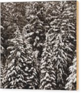 Snow-laden Forest Wood Print