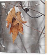 Snow Leaves Wood Print