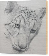 Snow Leopard - Intent Wood Print