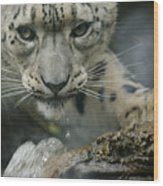 Snow Leopard 11 Wood Print