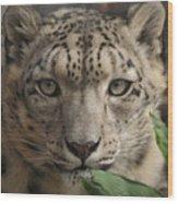 Snow Leopard 13 Wood Print