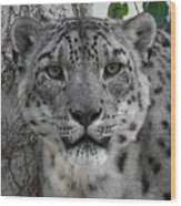 Snow Leopard 5 Posterized Wood Print