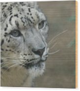 Snow Leopard 8 Wood Print