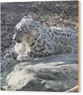 Snow-leopard Wood Print