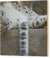 Snow Leopard Nap Wood Print