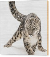 Snow Leopard On The Prowl Viii Wood Print