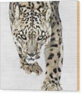 Snow Leopard On The Prowl X Wood Print