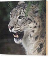 Snow Leopard Portrait Wood Print