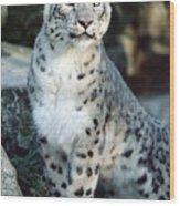 Snow Leopard Uncia Uncia Portrait Wood Print by Gerry Ellis