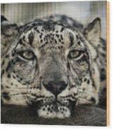 Snow Leopard Upclose Wood Print