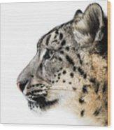 Snow Leopard Xv Wood Print