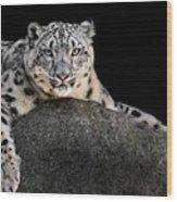 Snow Leopard Xxii Wood Print