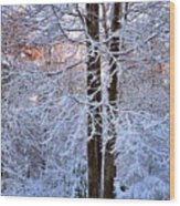 Snow Maple Morning Wood Print