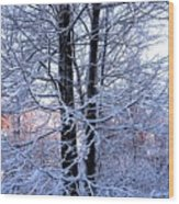 Snow Maple Morning Landscape Wood Print