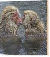 Snow Monkey Kisses Wood Print