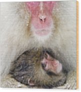 Snow Monkey Love Wood Print