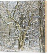 Snow On A Hedge Tree Wood Print