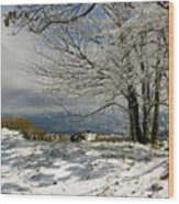 Snow On Beech Mountain  Wood Print