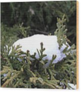 Snow On Cedar Tree Wood Print