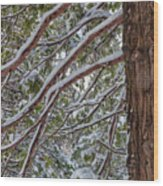 Snow On The Branches Wood Print