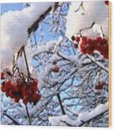 Snow On The Mountain Ash Wood Print