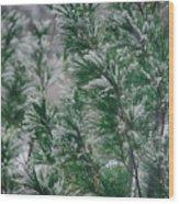 Snow On The Pine Wood Print