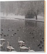 Snow Over Swan Lake Wood Print
