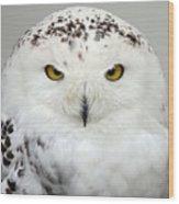 Snow Owl Wood Print
