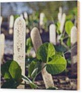 Snow Peas Please Wood Print