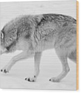 Snow Prowler Bw Wood Print