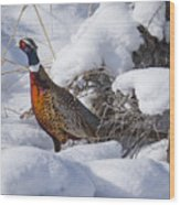 Snow Rooster Wood Print